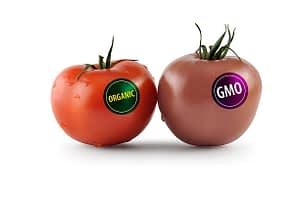 Are Genetically Modified Foods Safe?