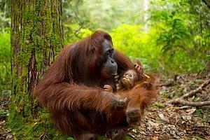 Best 10 Luxury Wildlife Experiences